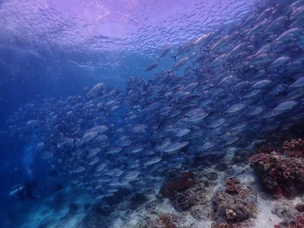 西巴丹(Sipadan)潜水