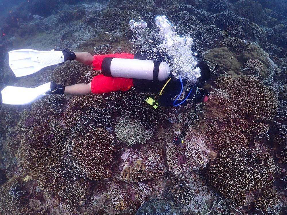龙木到、萨萨克(龙目岛)潜水