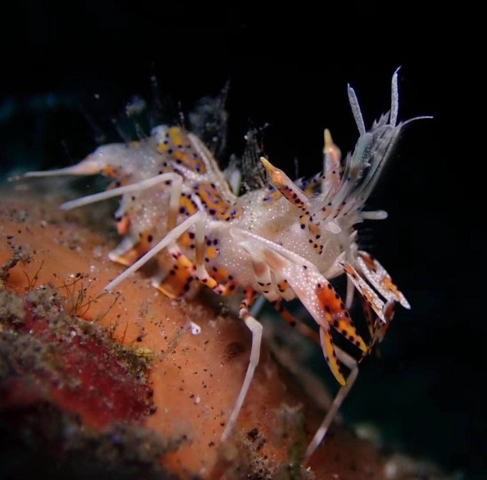 图兰奔、图兰本(Tulamben)潜水