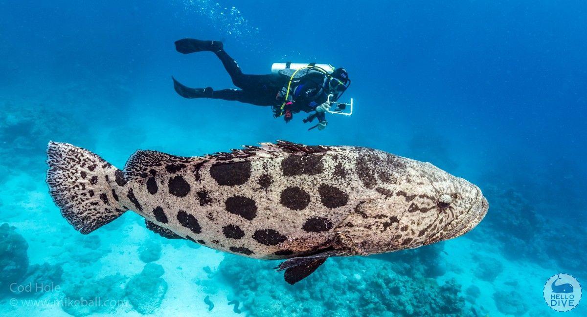 (蜥蜴岛)潜水