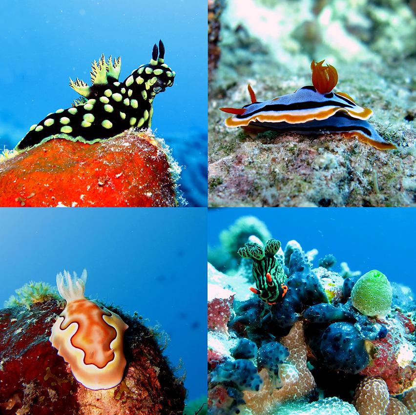 杜马格特(Dumaguete)潜水