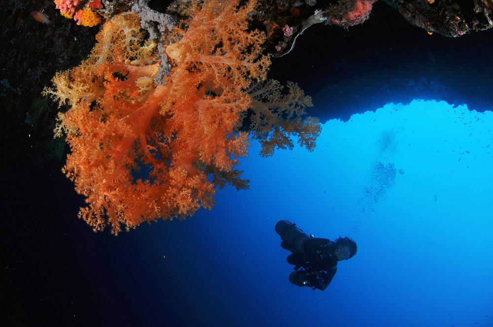 莫阿尔博阿尔(Moalboal)潜水