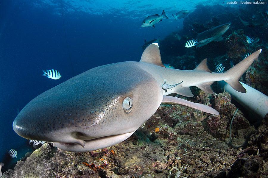 壁纸 动物 海底 海底世界 海洋馆 水族馆 鱼 鱼类 桌面 900_598